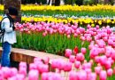 Çiçekçilerde 'Sevgililer Günü' heyecanı