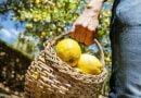 Romanya Türk limonuna yeniden kavuşacak