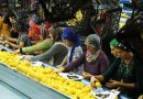 Türk limonunun gözde ihraç ülkelerinden birisi de Romanya